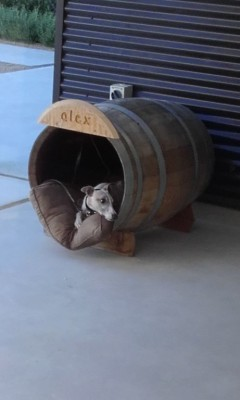 Comfy wine dog box!