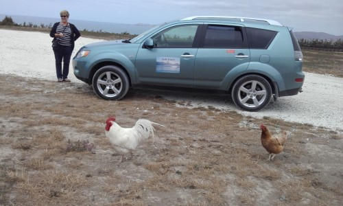 Chooks planning their assault on the car.